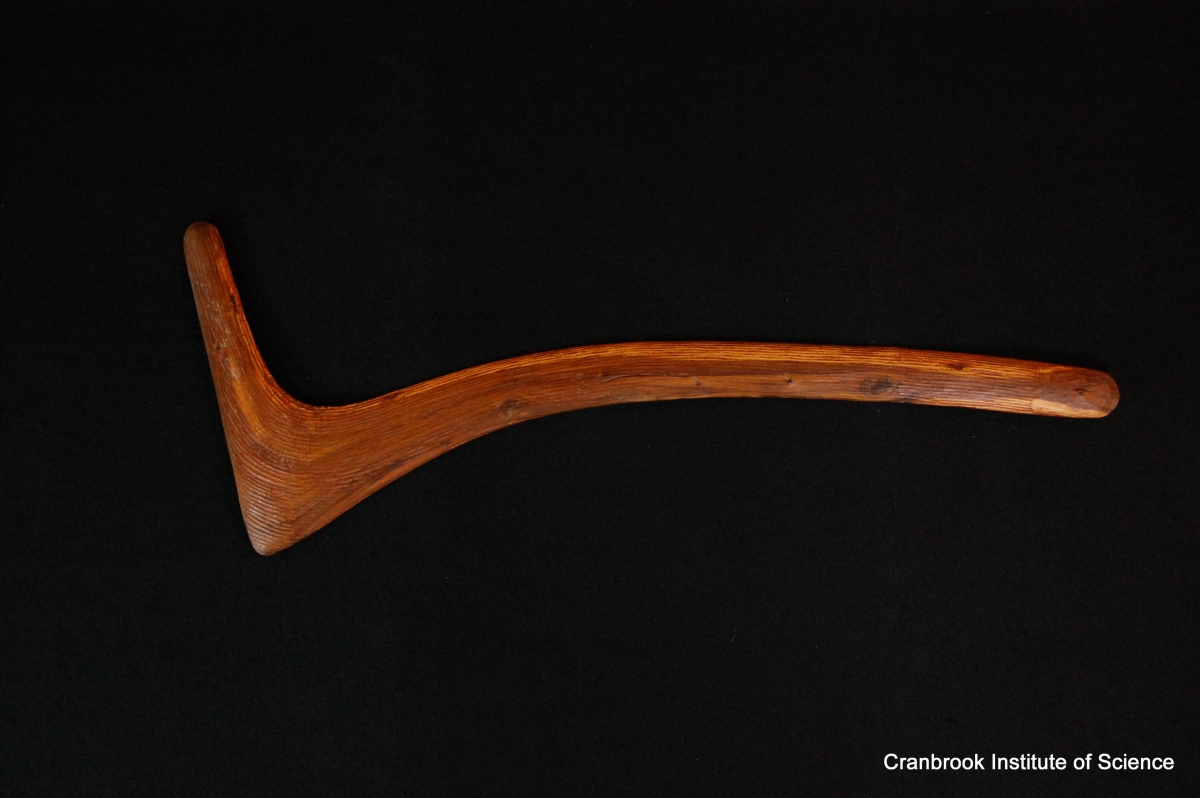 CIS Collections Boomerang